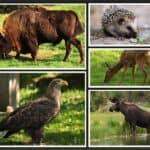 polish fauna