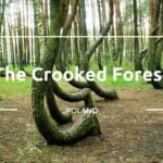 forest-thumbnail-copy