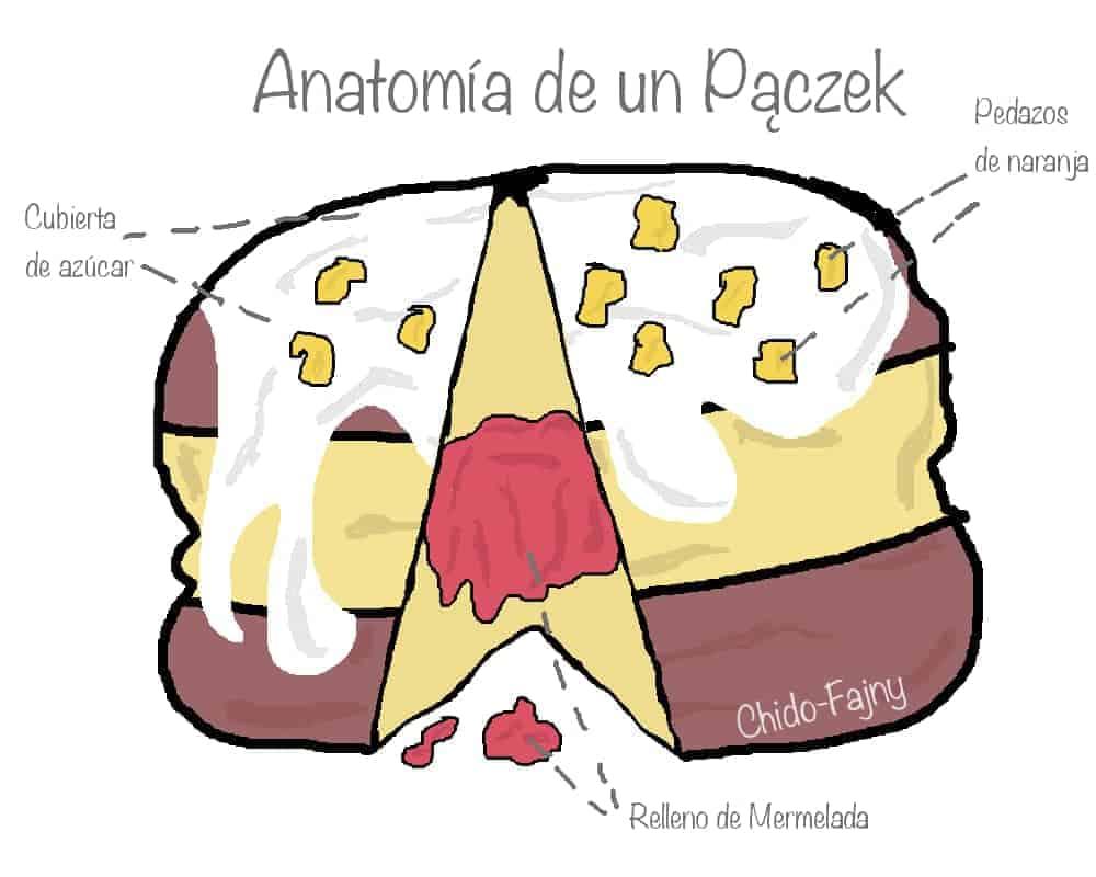anatomia-paczek-min