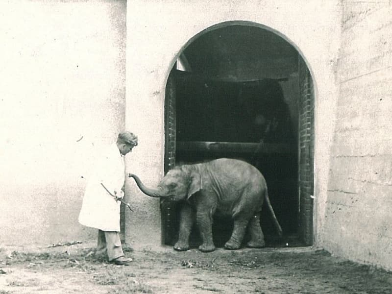 tuzinka-elephant-min